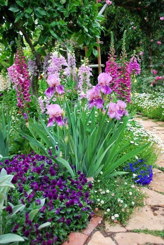 Foxglove, iris, pansy, daisy