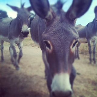 Our neighbour's donkeys - gli asini del vicino Photo credit: Gareth Price
