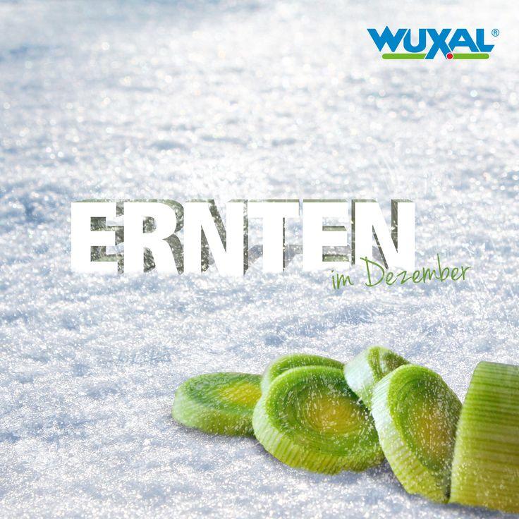 17 Best Images About Tipps, Ernten, Säen, Pflanzen Im November On ... Garten Im November Tipps Pflege