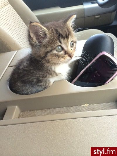 This Is The Newest Trend In Car Seats For Small Cats You Cant See It But There A Seat Belt Which Goes Across My Belly