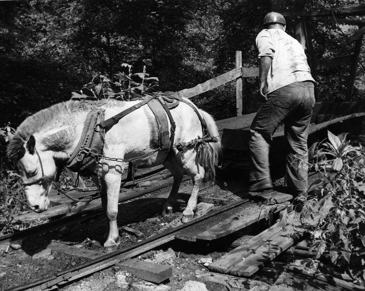 History of the Mini Horse Breed