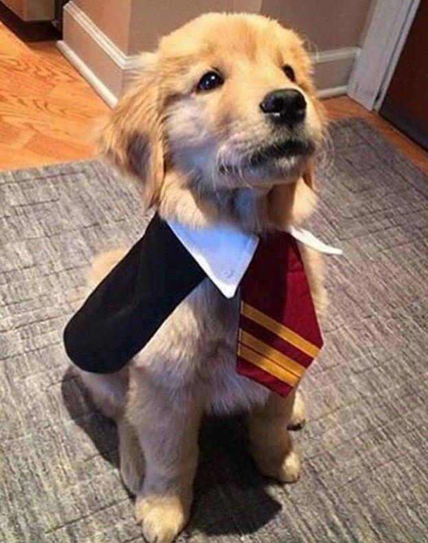 Best 25+ Puppy costume ideas on Pinterest | Pet halloween ...
