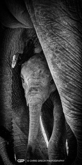 Peek-a-boo - Chris Grech Photography