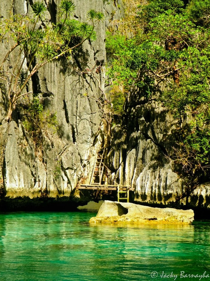 7 best images about tarlac philippines on pinterest trees