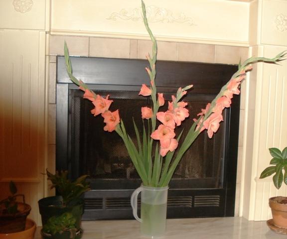 Flowers my neighbor gave me.