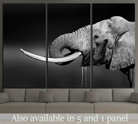 Elephant bull with large tusks in Addo National Park №1330 Canvas Print