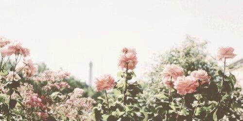 Untitled | Flower header, Twitter header aesthetic ...