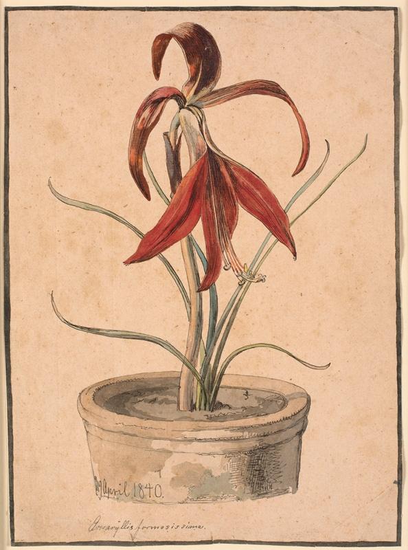 """Johan Thomas Lundbye (1818 -1848), """"Blomstrende Amaryllis"""". 1840"""