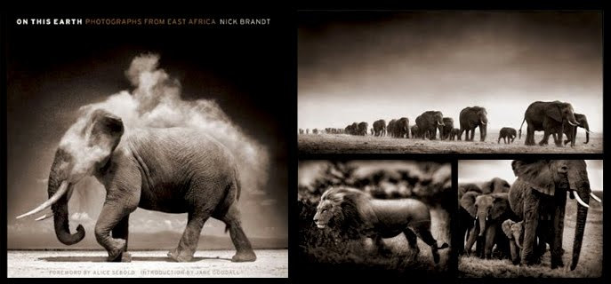 On This Earth (Nick Brandt)