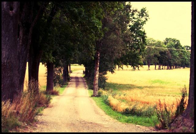 old dirt roads