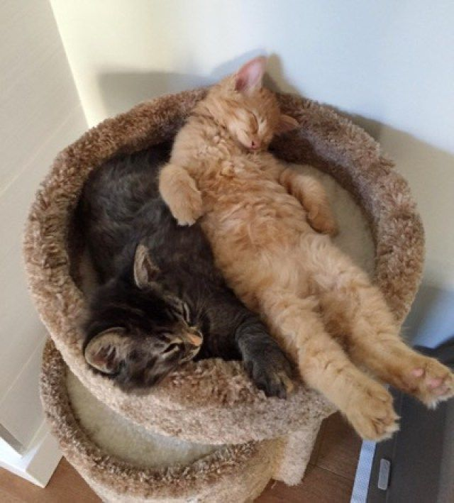 These Cats Love Sharing Their Tiny Bed Together - We Love Cats and Kittens - Tap the link now to see all of our cool cat collections!