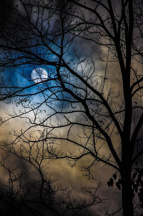 beautiful moon,trees and clouds