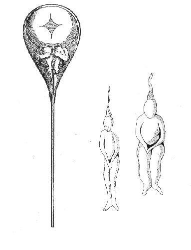 homunculus noun: 1. A diminutive human being. 2. A fully formed, miniature human being that was earlier believed to be present in a sperm or an egg.