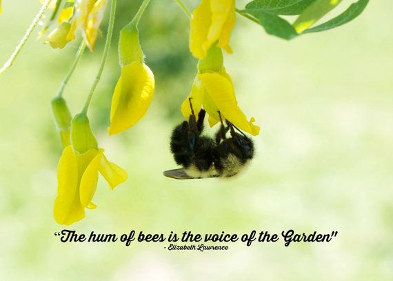 The hum of bees is the voice of the Garden  by KaEPhotography.    A fun photo for those who love their gardens
