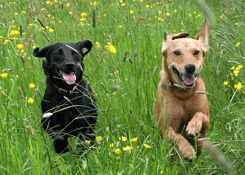 Prairie Wolf Dog Park, Lake Forest - Great place for dogs to run and play off the leash.