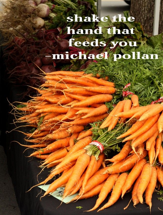 Food Rules by Michael Pollan Essay