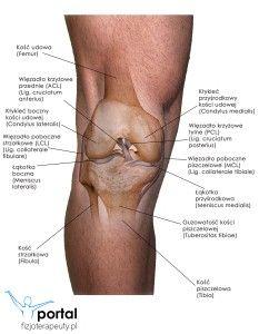 Wszystko o stawie kolanowym #anatomia #fizjoterapia #nauka #studia #wiedza