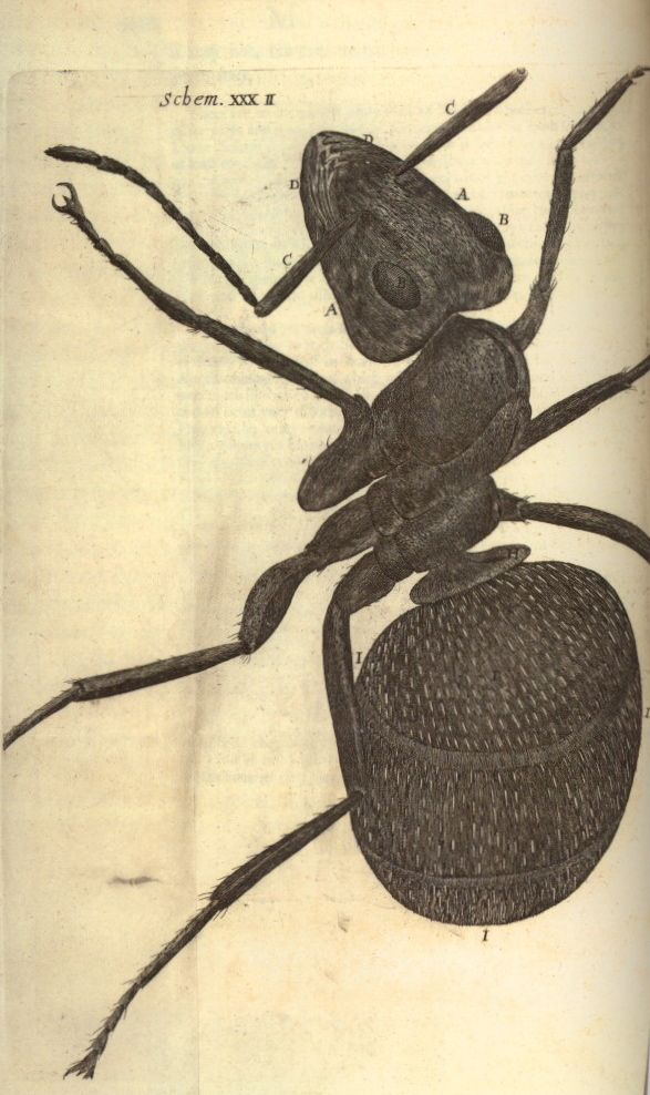 Robert Hooke, Ant, from Micrographia  London, 1665  The Huntington Library, San Marino, California