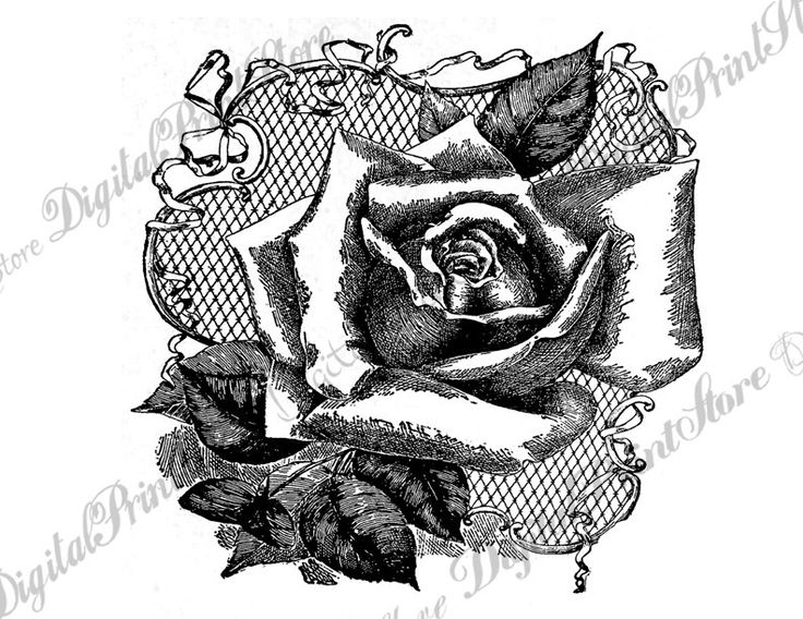 Chalkboard Rose 001 Wall Decor, Scrapbooking Supplies, Embroidery Pattern, Commercial Use by DigitalPrintStore on Etsy