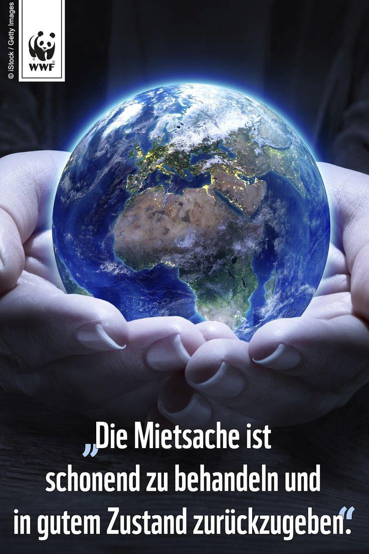Zitat zum Sonntag.  Setzt ein Zeichen für den Schutz unserer Erde: www.wwf.de/earthhour #EarthHour