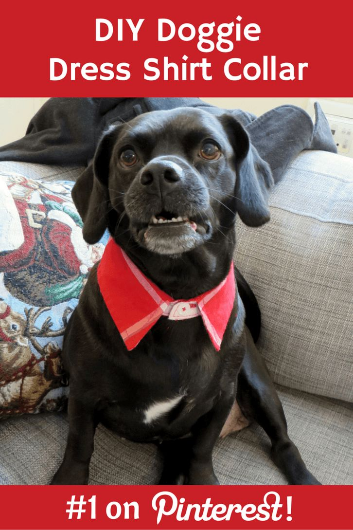 Dog Dress Shirt Collar