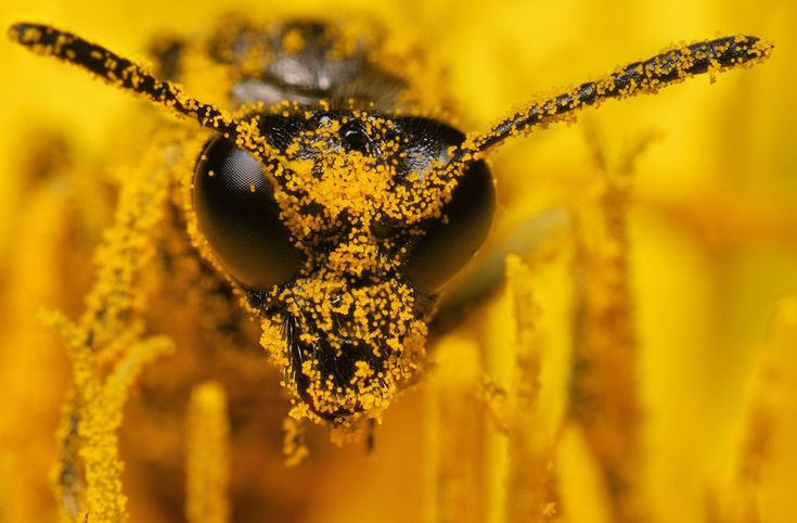 100 Award Winning Macro Photography Examples For You ハチ 黄色