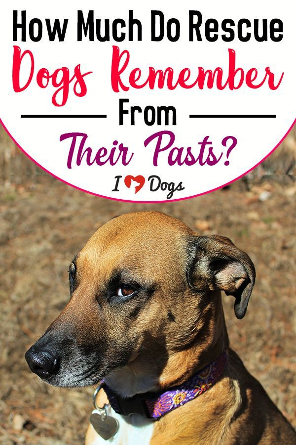 How Much Do Rescue Dogs Remember From Their Pasts In 2020