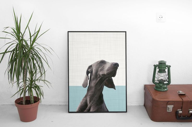 Weimaraner Dog, Animal Print, Pet Portrait, Photography Prints, Dog Print, Dog Portrait, Animal Lover Gift, Poster 50x70, Art Prints by SilBarragan on Etsy