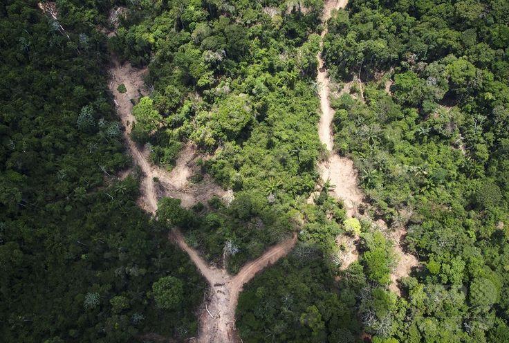 ブラジル・パラ(Para)州のアマゾン(Amazon)熱帯雨林で行われている違法伐採の現場(2014年10月14日撮影)。(c)AFP/Raphael Alves ▼16Oct2014AFP|上空から見たアマゾンの違法伐採現場 http://www.afpbb.com/articles/-/3029095 #Illegal_logging #Para_Brazil