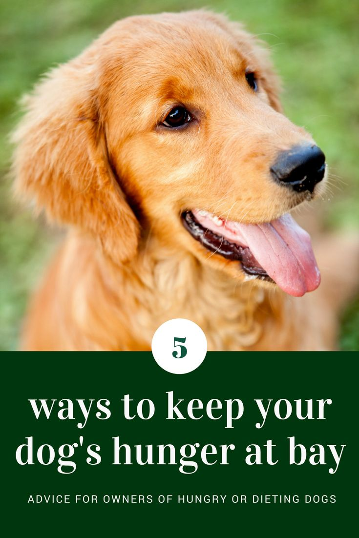 5 Ways To Keep Your Dog S Hunger At Bay Easiest Dogs To Train