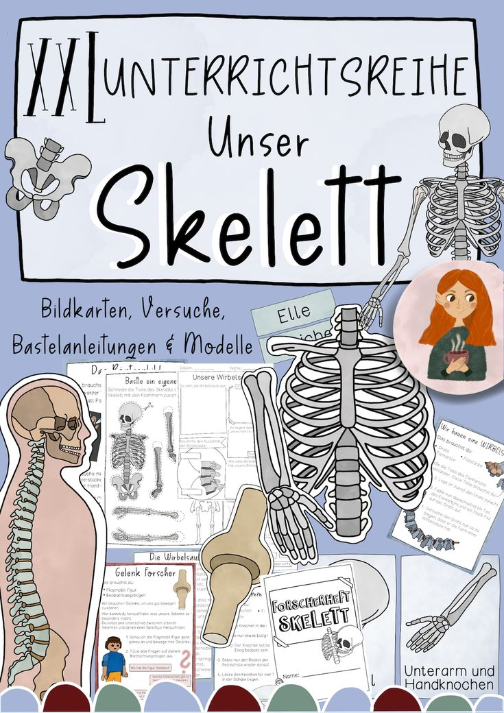 skelett  xxl materialpaket  knochen gelenke
