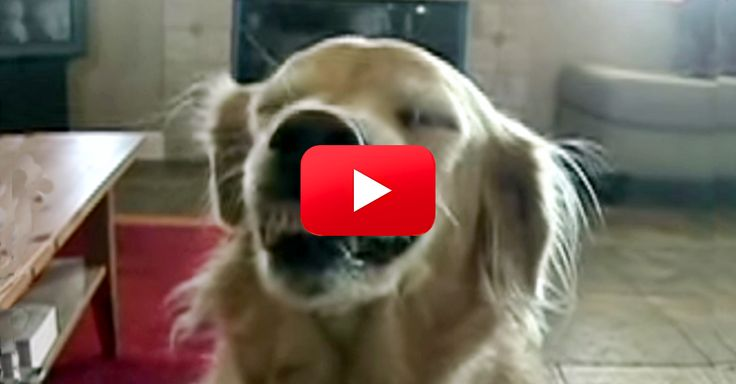 I've Never Seen A Dog Do This! This Is Hilarious! | The Animal Rescue Site Blog