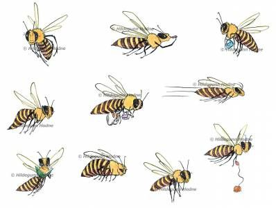Bees Design