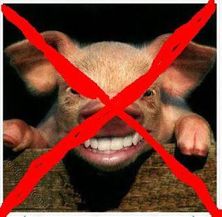 babi menjijikan