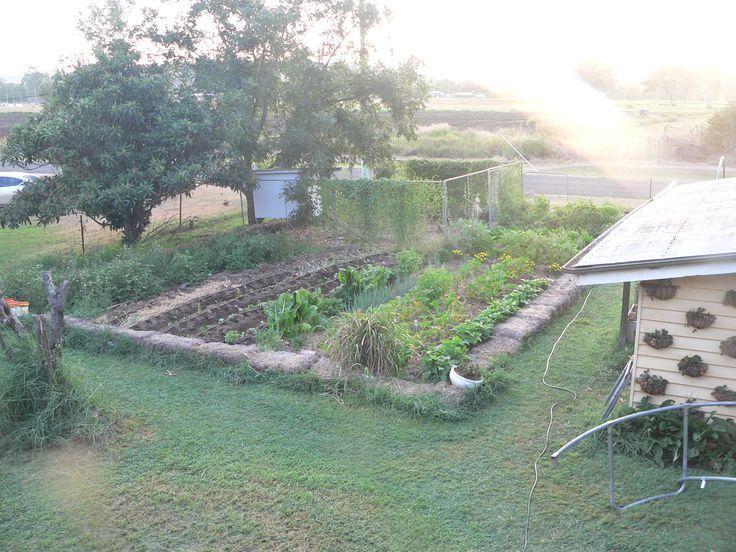 Our Kitchen garden. Urban farm @ Savour Soil Permaculture