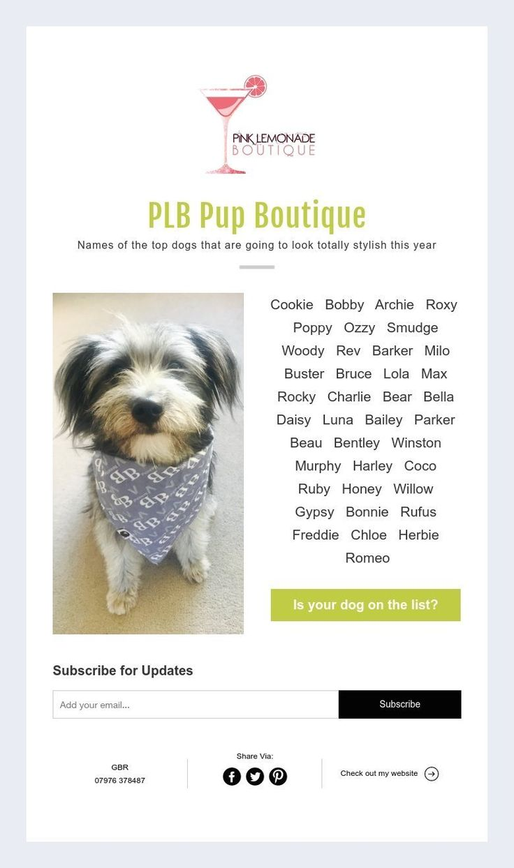 PLB Pup Boutique  Names of the top dogs that are going to look totally stylish this year