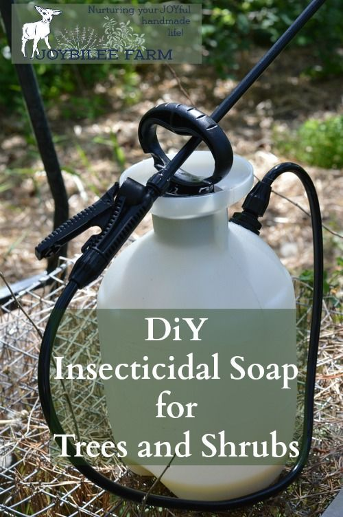 This insecticidal soap spray can be made at home for only a few dollars.  It kills garden pests by coating their bodies with oil.  Since insects breathe through their skin, it smothers them.  Then the oil stays on the leaves making them inhospitable to further predation.  But it won't harm pets or humans.  Avoid spraying on fruit shrubs with open flowers and pollinators at work.   This can be used on fruit trees, shrubs, canes, and vines.  Avoid spraying on the vegetable garden, as the…