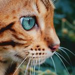 This is not my cat. But it's the prettiest cat I've ever seen.
