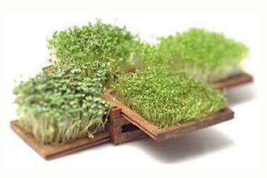 Edible Indoor Miniature Garden Japanese garden ornaments Mini