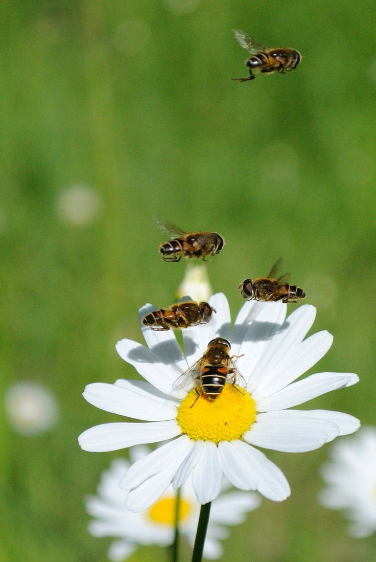 Image result for bees in flowers pictures pinterest