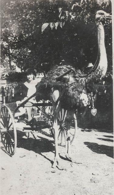 Ostrich Cart?