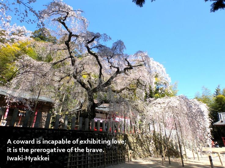 小川諏訪神社の枝垂れ桜