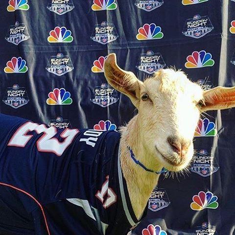 Tom Brady = The GOAT