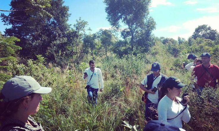 Ontem iniciamos mais um treinamento de classificação de vegetação e estágios sucessionais na zona de transição Cerrado/Mata Atlântica do Estado de São Paulo oferecido in Company aos analistas da CETESB, órgão ambiental do Estado. O tema de hoje é identificação de gramíneas nativas do cerrado! ;) #ensino #ensinar #cursos #incompany #treinamento #analista #botanica #gramineas #cerrado #brasilbioma #aprender #preservar #foco #beleza #savana #lindo #preserve #sos #proteja #valorize