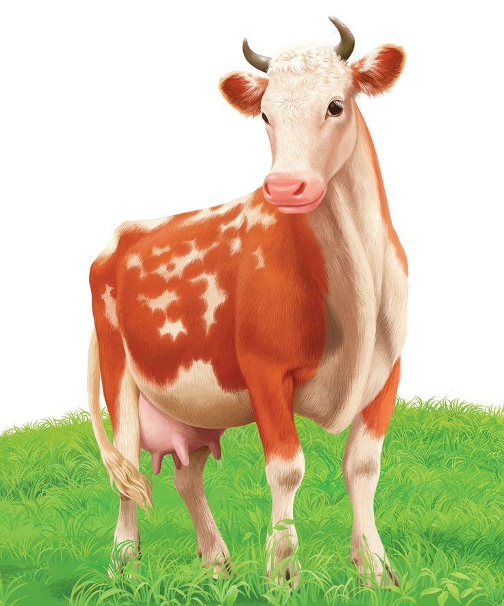 Картинки коровы для детей распечатать цветные, картинки шкафчики детском