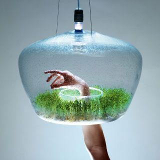 16 Best Jellyfish Tanks Images On Pinterest Jellyfish