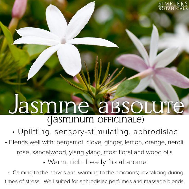 ginger jasmine massage adelaide