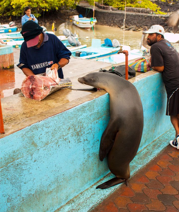 Such a cool atmosphere at this fish market - Galapagos Islands