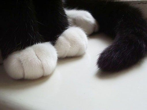 There's nothing cuter than a baby's hands or a kitten or puppy's paws.