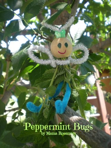 Peppermint Bugs
